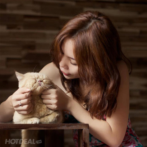 Ailu Cat House Cafe