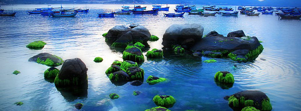 Tour Tết Ất Mùi - Vịnh Vĩnh Hy – Đảo Bình Hưng – Mũi Né 3N2Đ
