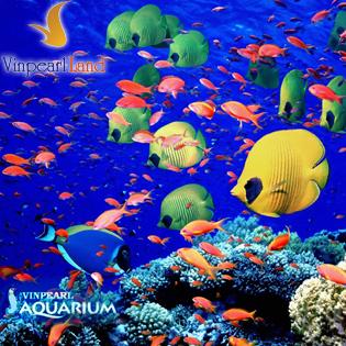Vé Tham Quan Thủy Cung Vinpearlland Aquarium Cho Người Lớn