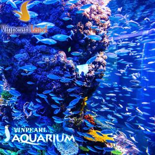 Vé Tham Quan Thủy Cung Vinpearlland Aquarium Cho Trẻ Em