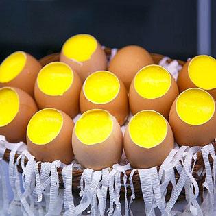 Combo 10 Bánh Plan Quả Trứng Mới Lạ, Hấp Dẫn – Cực Ngon, Cực Rẻ