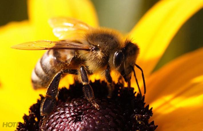12 Bước Chăm Sóc Mặt Khỏe Đẹp Bằng Nọc Ong Newzealand
